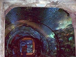 Mandalay Bay Shark Reef Las Vegas