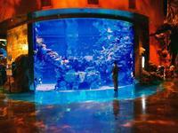 Silverton hotel casino aquarium free shows access vegas for Fish tank las vegas